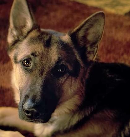 a-dogs-purpose-inline-5f609f17-2924-4d72-9882-c0b0b3ffe731
